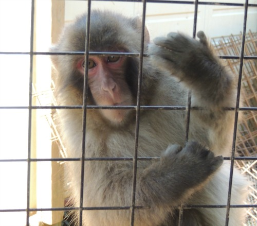 Another Monkey Photo