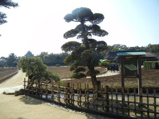Pine Korakuen