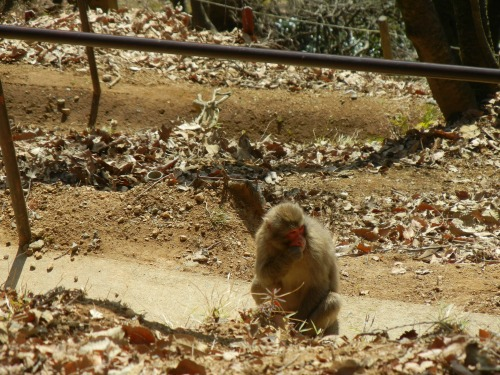 Monkey on Trail