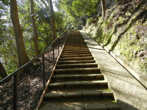 Monkey Park Steps