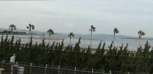 Palm  Trees from Shinkansen