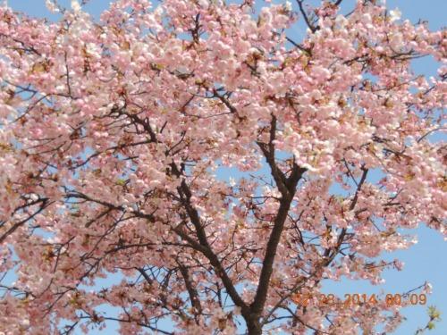 Plum Tree Shizuoka