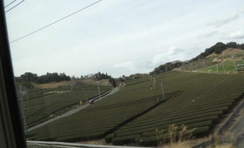Shizuoka Tea from Shinkansen