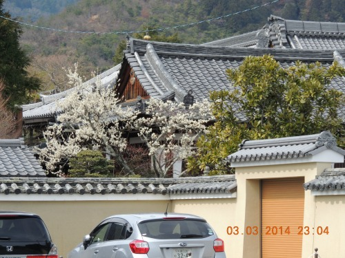 View of Plum and Traditional Roof