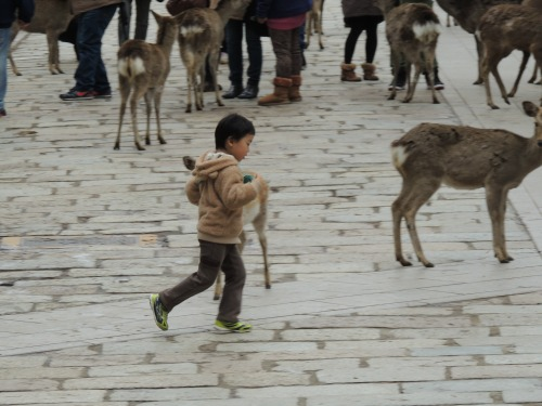 Kid with Deer Nara