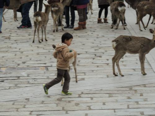 Kid with Deer Nara