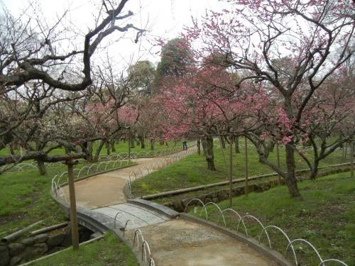 Kitano Plum Garden