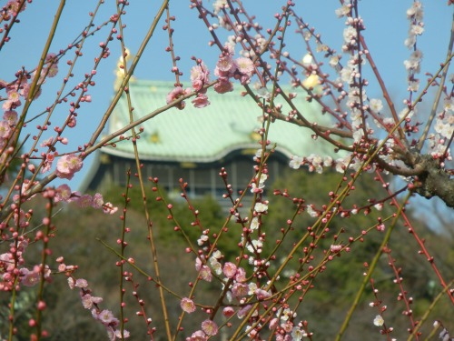 Osaka Castle Through Plums