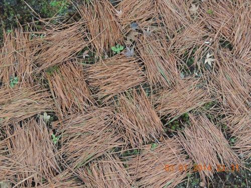 Pine Needle Pattern