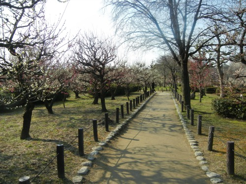 Plum Garden Near Osaka Castle