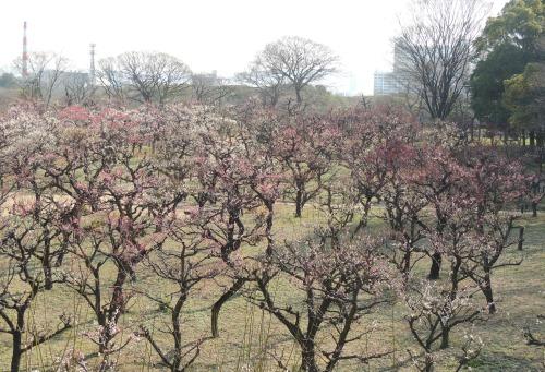 Plum Garden Osaka Castle