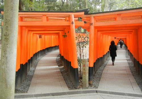 Tori Fushimi Inari-taisha