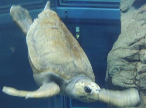 Turtle Osaka Aquarium