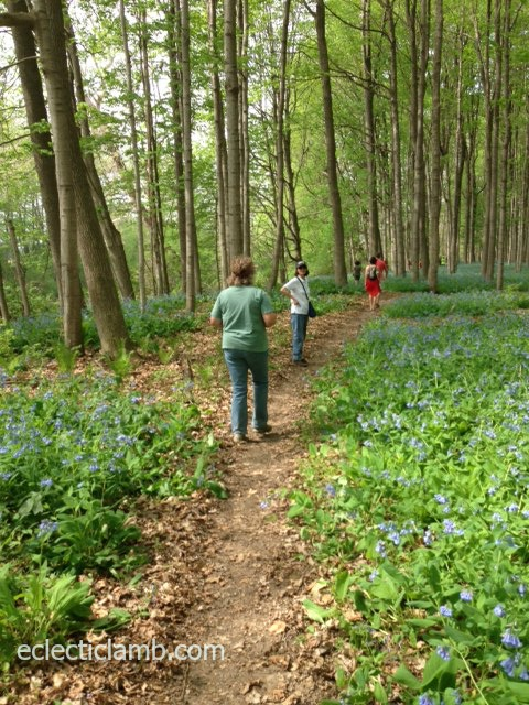 people on path bluebells