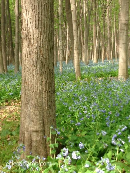 tree bluebells
