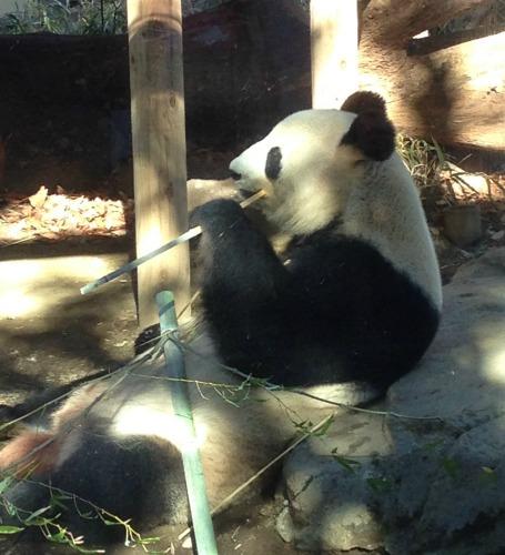 Panda in Tokyo.jpg
