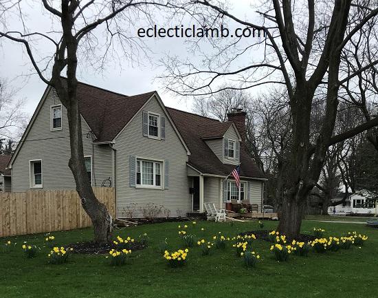 Daffodil Lawn