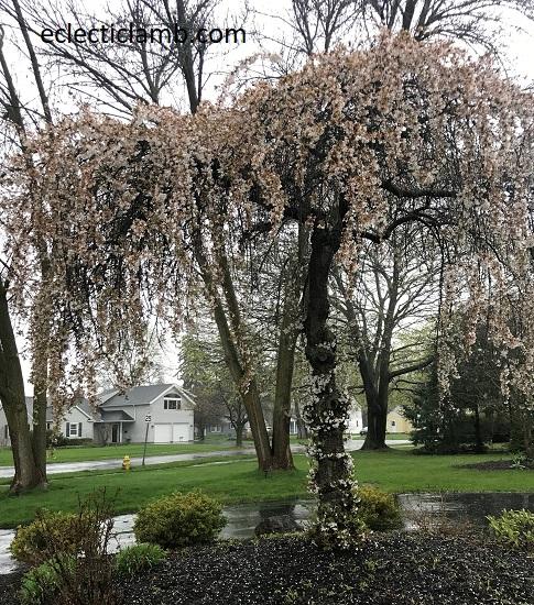 splendid spring tree