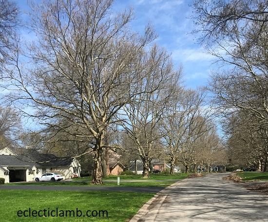 Whitewood Lane