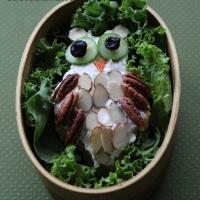 Owl Bento